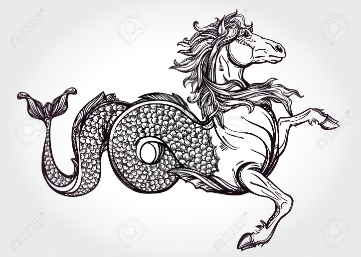 http://moziru.com/images/drawn-seahorse-heraldic-4.jpg