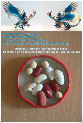 3dEye_MagianBeans_01_Seeds_small.jpg