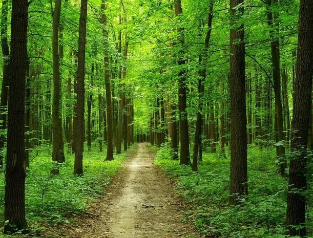 лес синий.jpg
